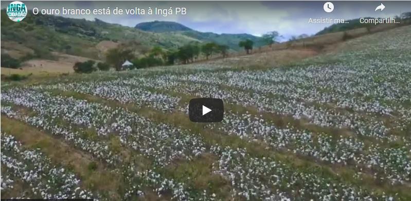 """VÍDEO: O """"ouro branco"""" de volta à Ingá. O resgate da cultura do algodão, agora orgânico e com compra da safra garantida"""
